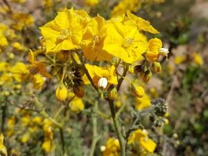 Gele bloem 2 (4)